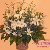 A big gift basket of lilies, orchids, lisianthus, and greenery. Price: 93 USD