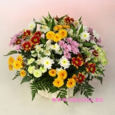 Basket of spray chrysanthemums, alstroemerias and fern. Price: 71 USD