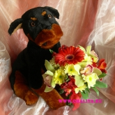 An arrangement of a toy-dog and a bouquet  of flowers. Price: 46 USD