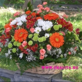 A gift basket of gerbera diasies, alstroemeria, chrysanthemum and carnations. Price: 100 USD