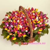 Basket of 301 multi-colored tulips Price: 423 USD