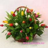 Basket of 35 multicolored tulips. Price: 85 USD