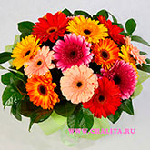 Bouquet of 15 multi-colored gerbera and salal.Price: 64 USD